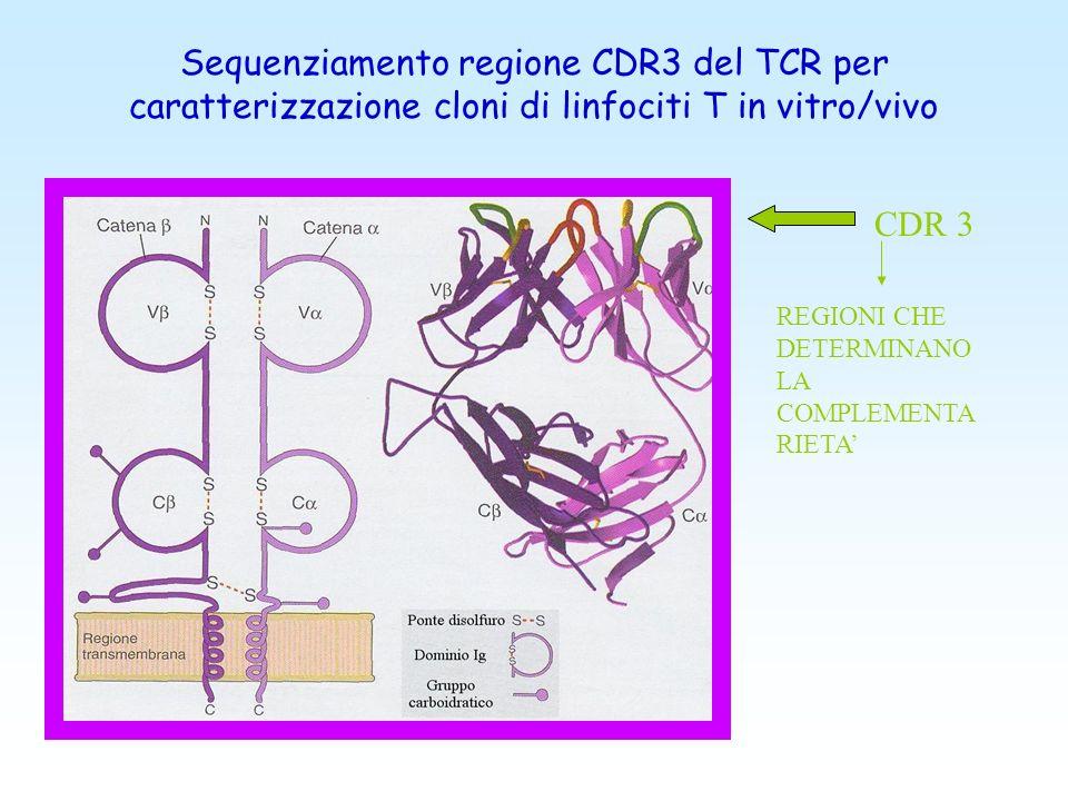 Sequenziamento regione CDR3 del TCR per caratterizzazione cloni di linfociti T in vitro/vivo