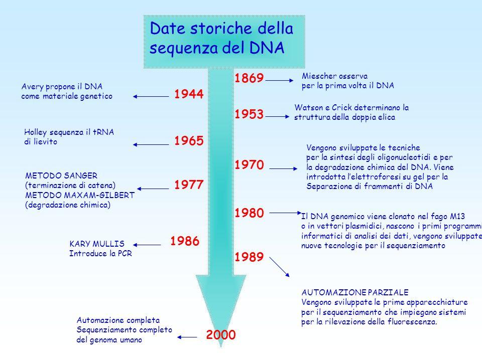 Date storiche della sequenza del DNA 1869 1944 1953 1965 1970 1977