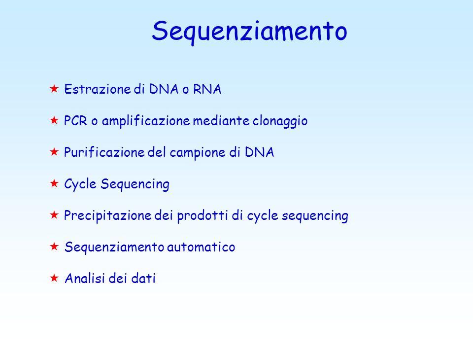 Sequenziamento Estrazione di DNA o RNA