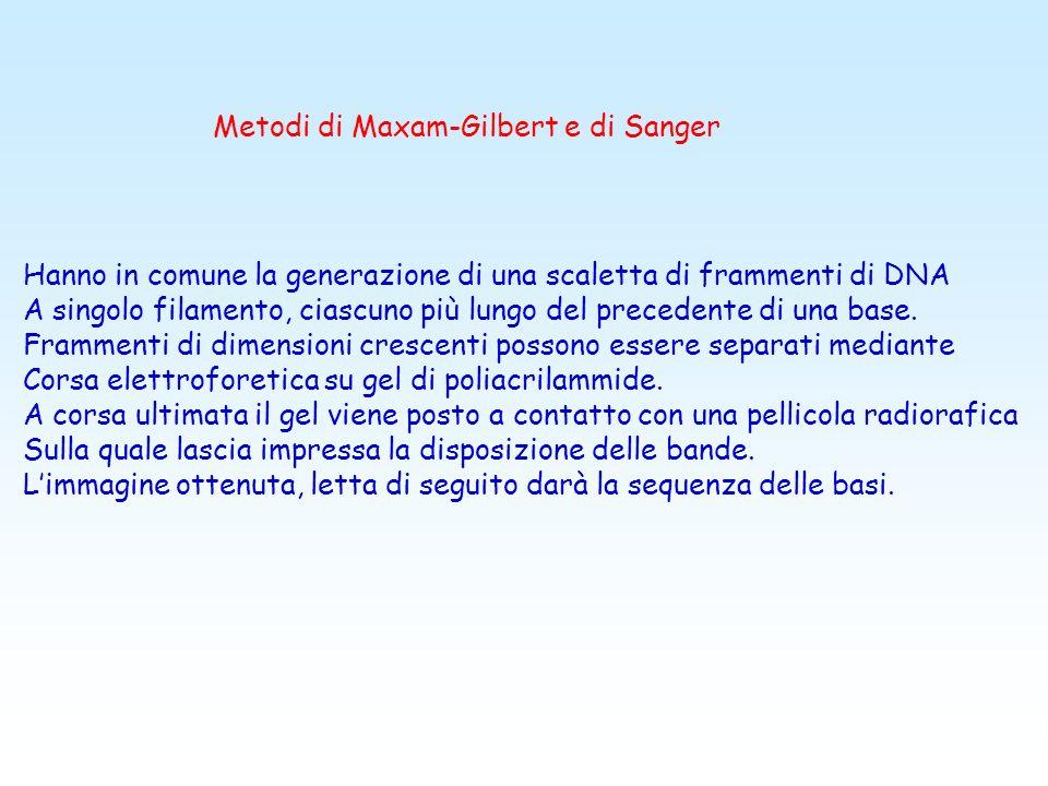 Metodi di Maxam-Gilbert e di Sanger