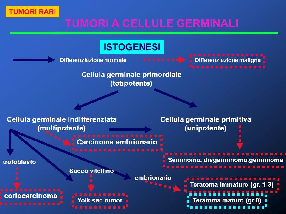 ISTOGENESI TUMORI RARI TUMORI A CELLULE GERMINALI