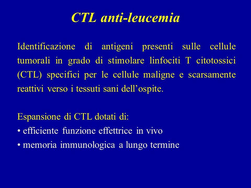 CTL anti-leucemia