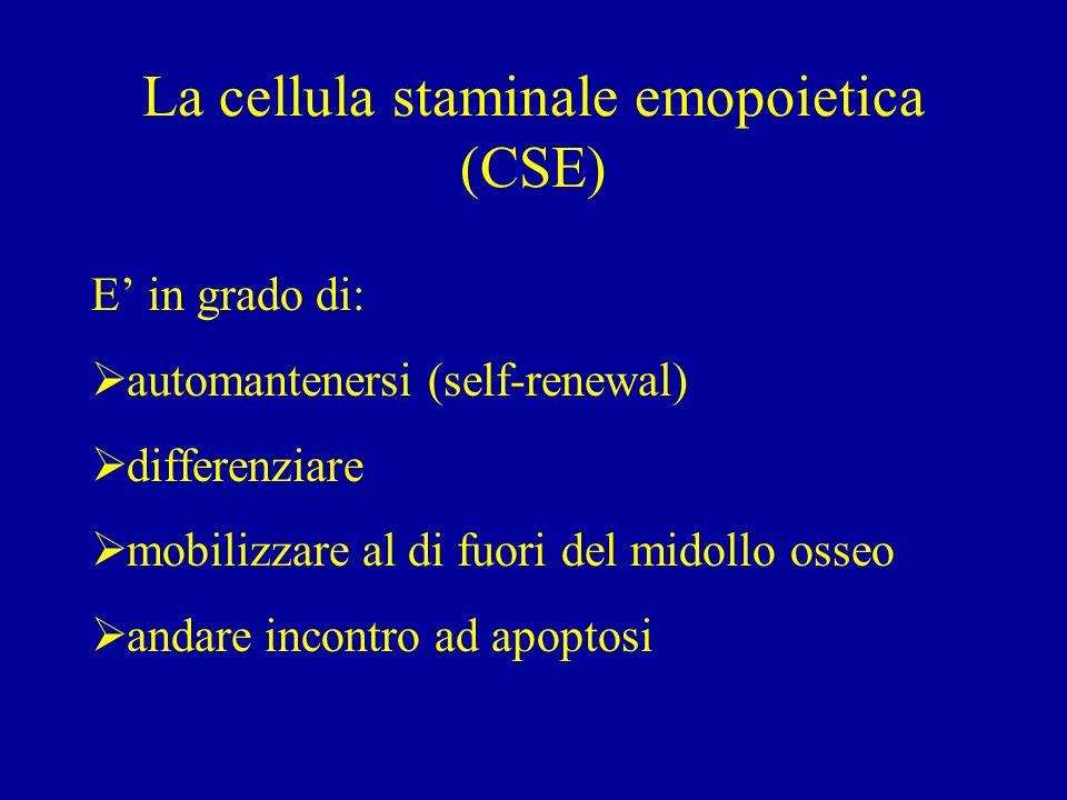 La cellula staminale emopoietica (CSE)