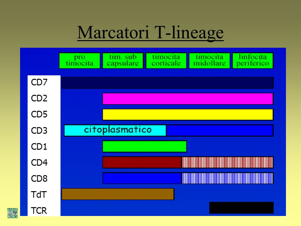 Marcatori T-lineage CD7 CD2 CD5 CD3 CD1 CD4 CD8 TdT TCR