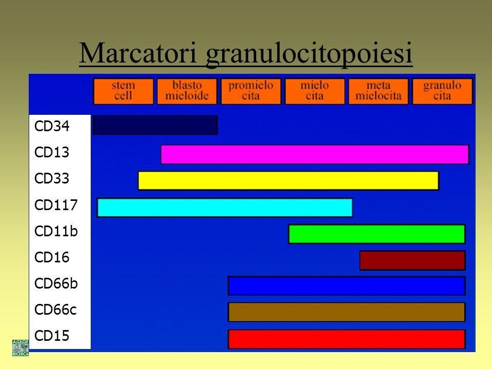 Marcatori granulocitopoiesi