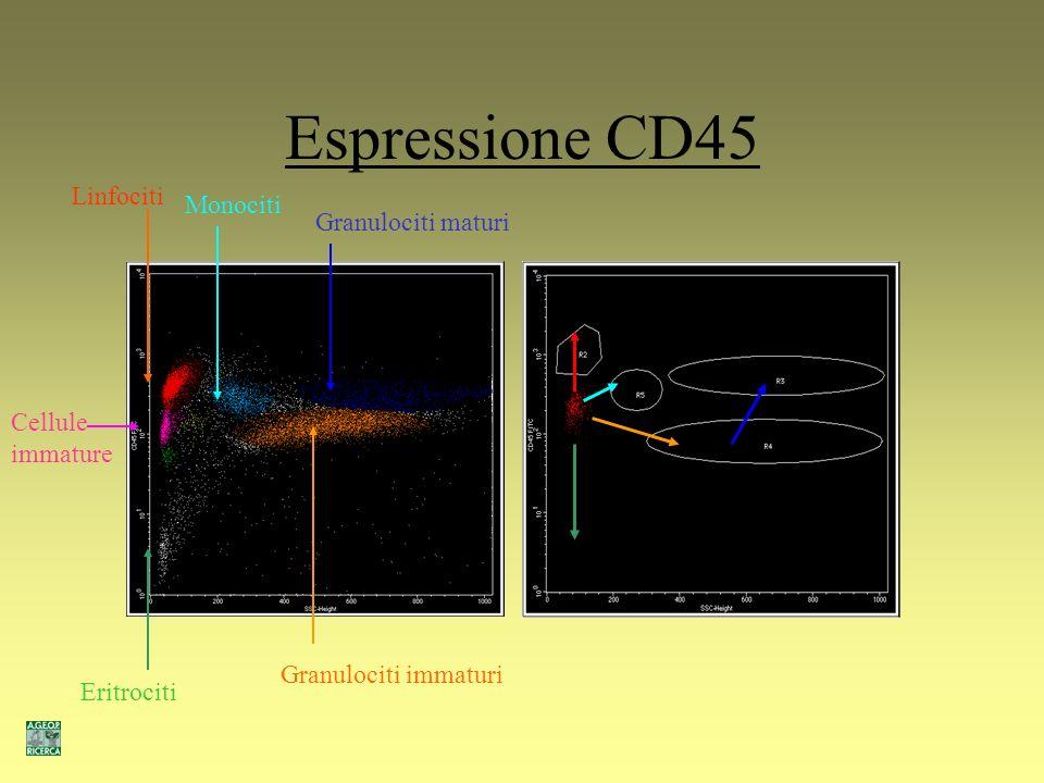 Espressione CD45 Linfociti Monociti Granulociti maturi