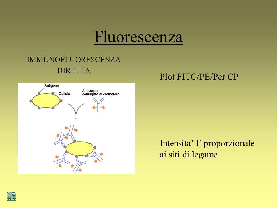 Fluorescenza Plot FITC/PE/Per CP