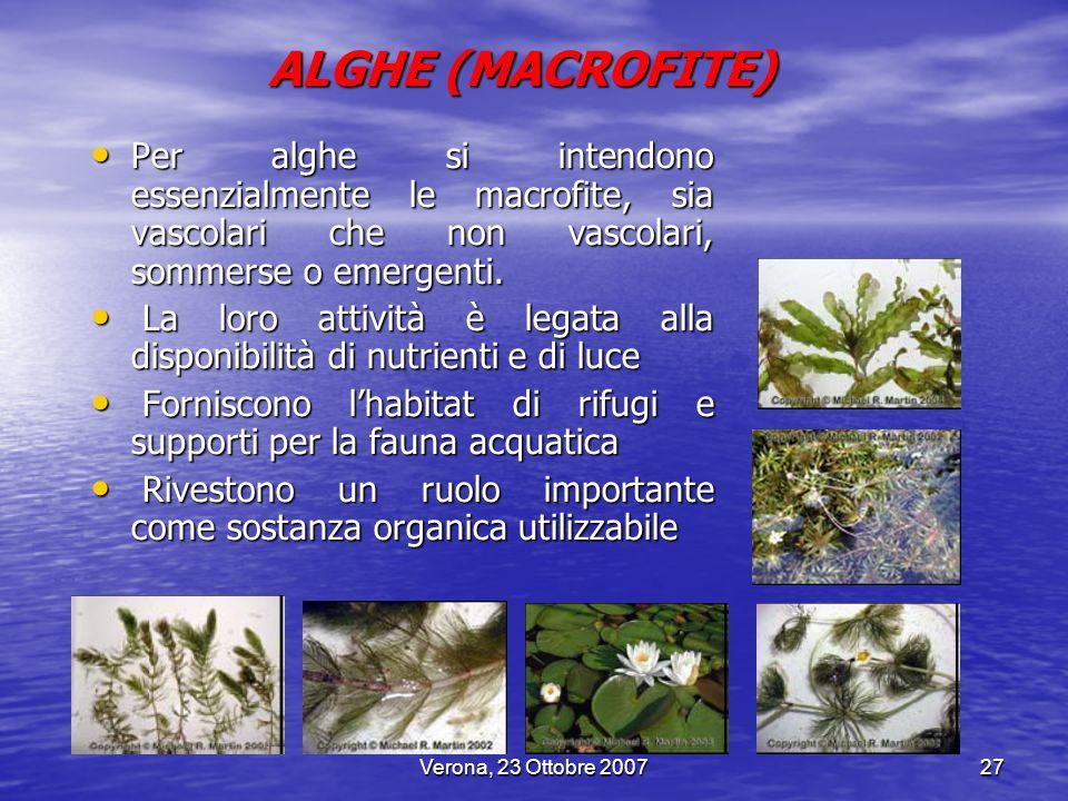 ALGHE (MACROFITE) Per alghe si intendono essenzialmente le macrofite, sia vascolari che non vascolari, sommerse o emergenti.