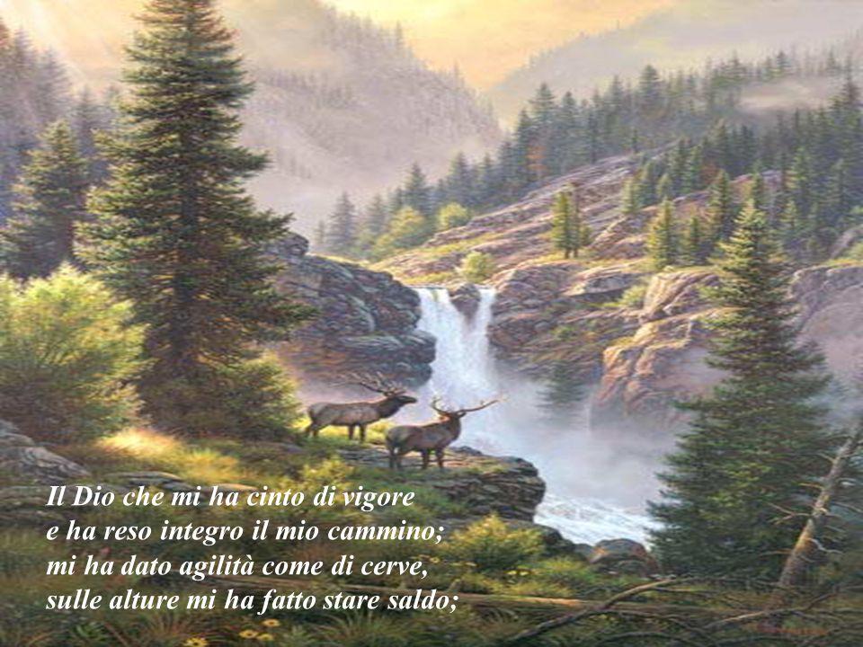 Il Dio che mi ha cinto di vigore e ha reso integro il mio cammino; mi ha dato agilità come di cerve, sulle alture mi ha fatto stare saldo;