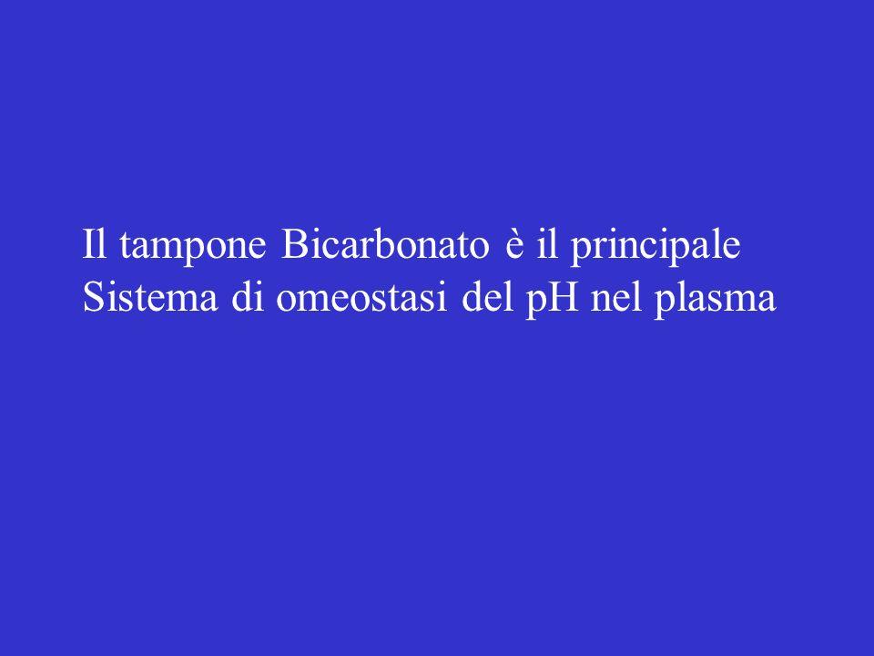 Il tampone Bicarbonato è il principale