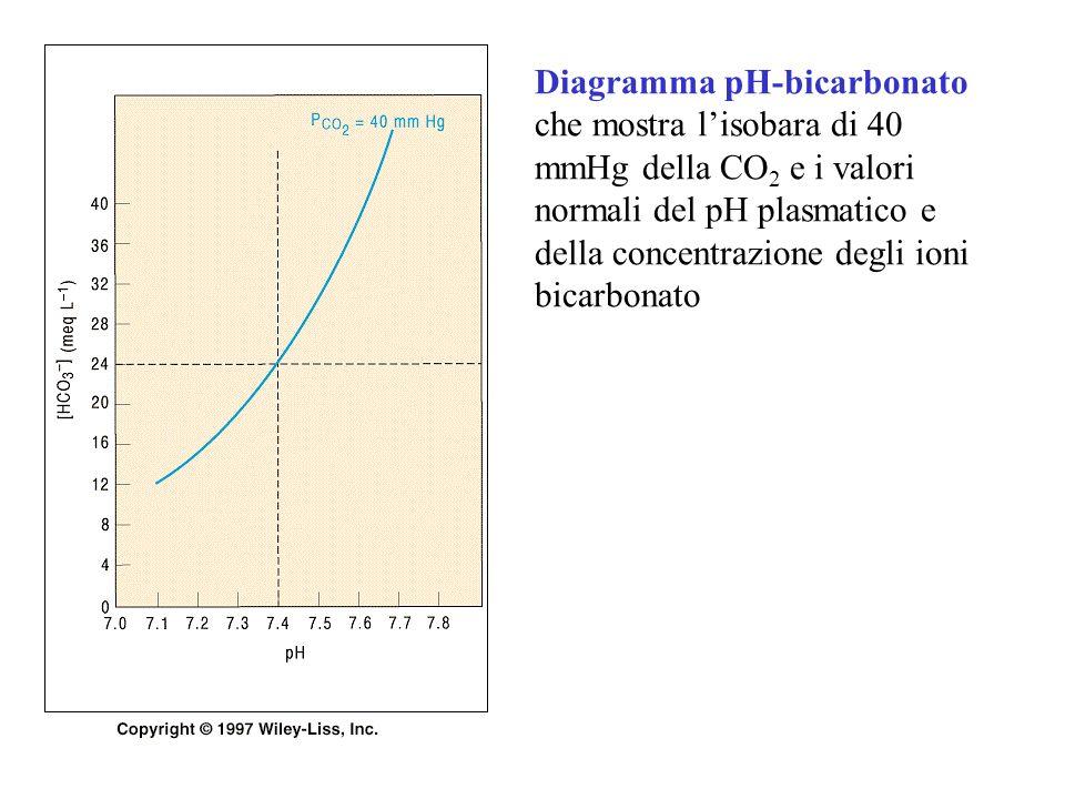 Diagramma pH-bicarbonato che mostra l'isobara di 40 mmHg della CO2 e i valori normali del pH plasmatico e della concentrazione degli ioni bicarbonato