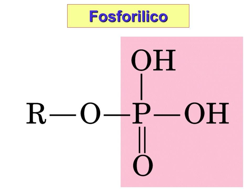 Fosforilico Condensazione tra alcool e fosfato