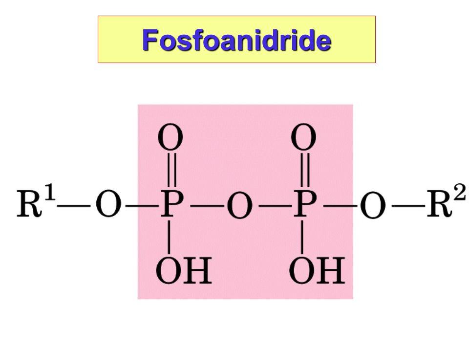 Fosfoanidride
