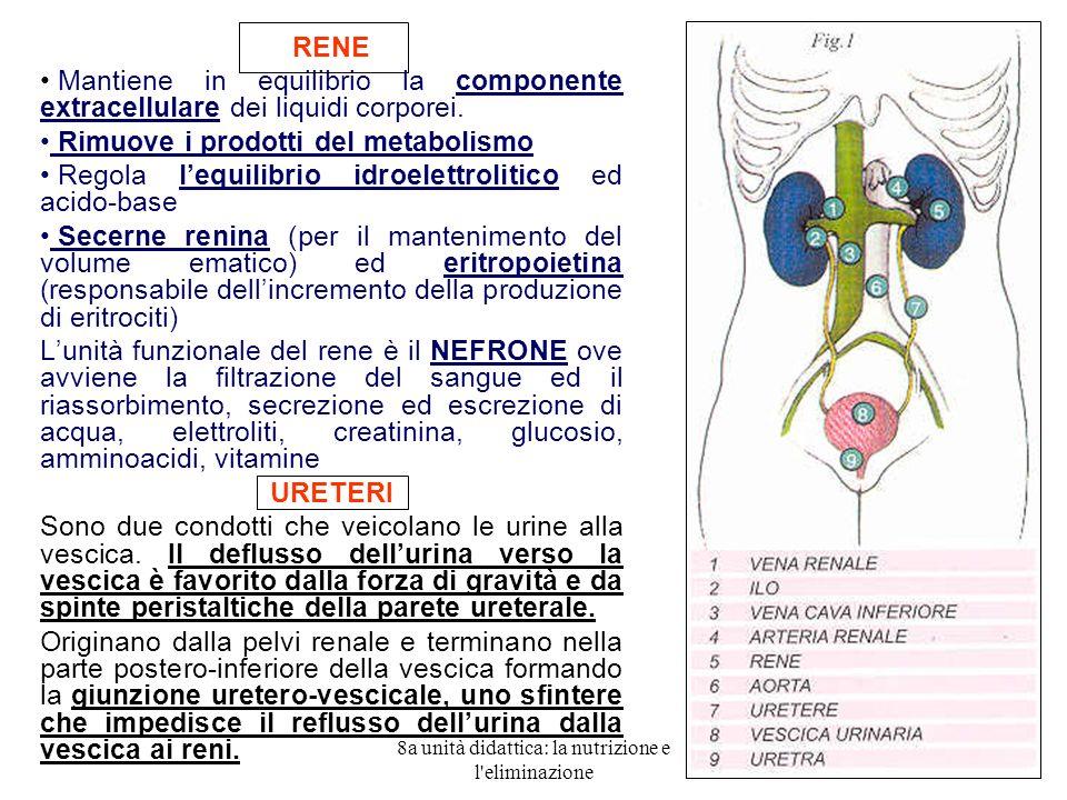 8a unità didattica: la nutrizione e l eliminazione