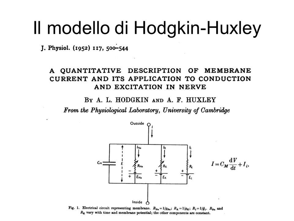 Il modello di Hodgkin-Huxley