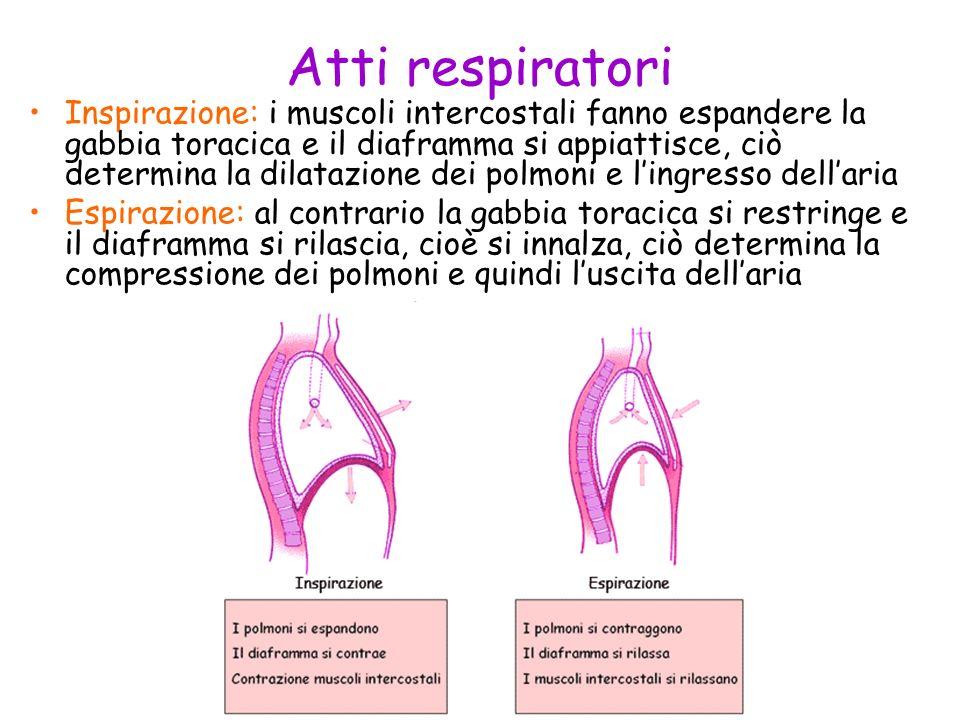Atti respiratori