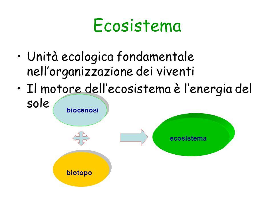 Ecosistema Unità ecologica fondamentale nell'organizzazione dei viventi. Il motore dell'ecosistema è l'energia del sole.