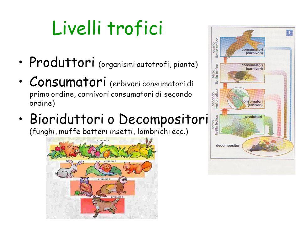 Livelli trofici Produttori (organismi autotrofi, piante)