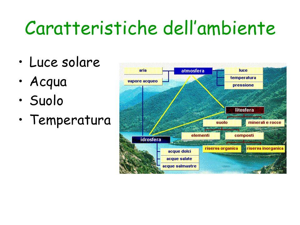 Caratteristiche dell'ambiente