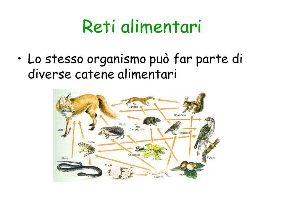 Reti alimentari Lo stesso organismo può far parte di diverse catene alimentari
