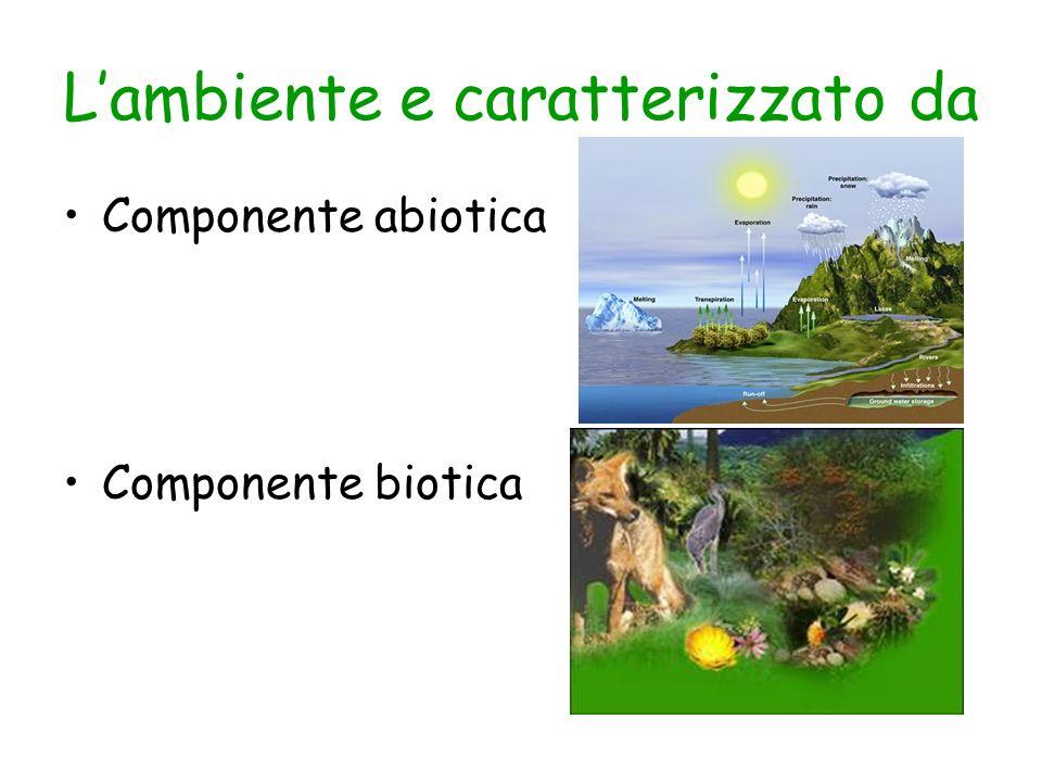 L'ambiente e caratterizzato da
