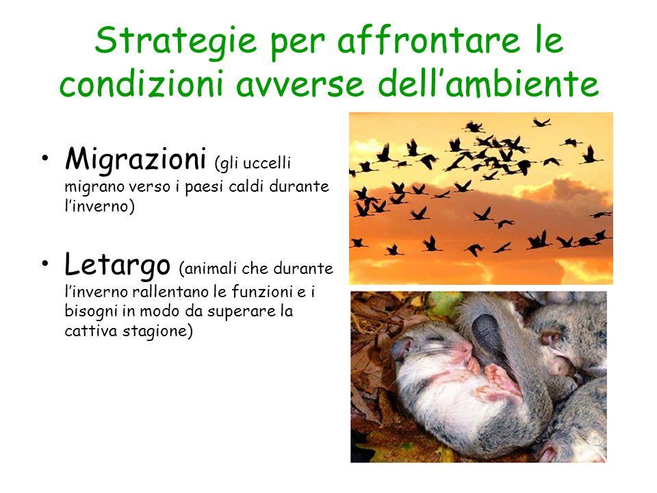 Strategie per affrontare le condizioni avverse dell'ambiente