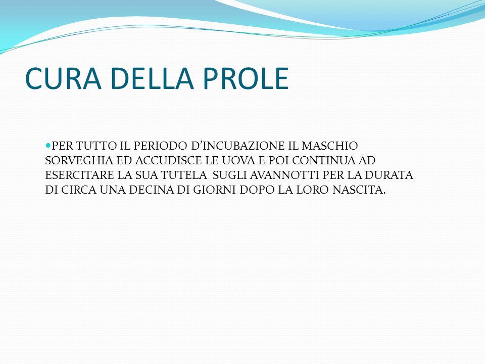 CURA DELLA PROLE