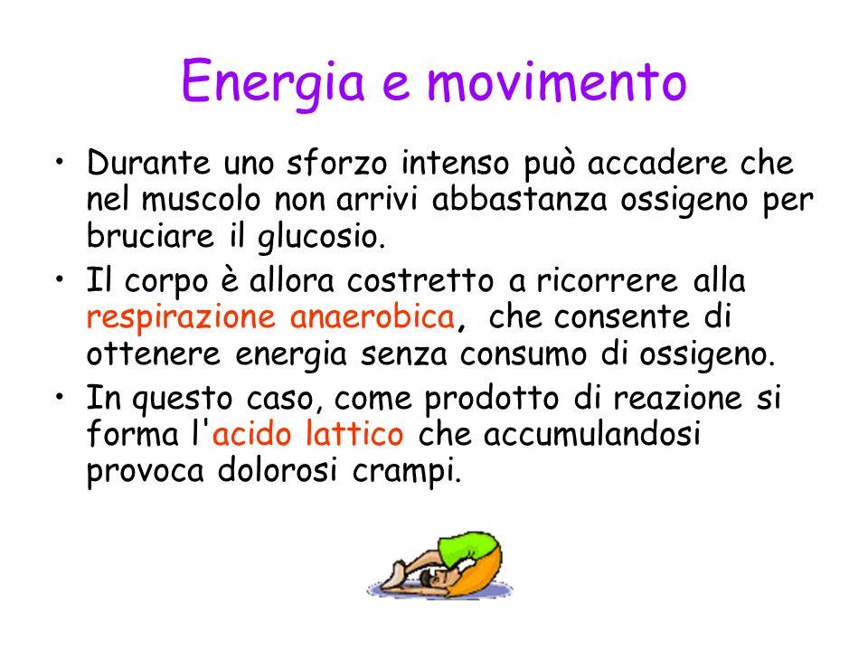 Energia e movimento Durante uno sforzo intenso può accadere che nel muscolo non arrivi abbastanza ossigeno per bruciare il glucosio.