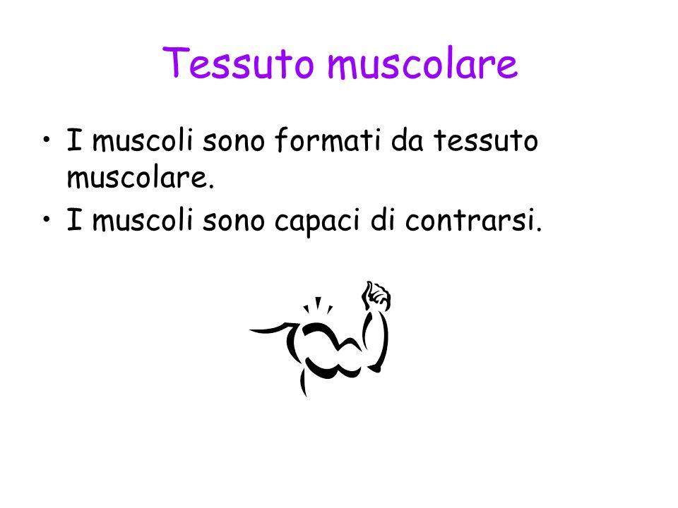 Tessuto muscolare I muscoli sono formati da tessuto muscolare.