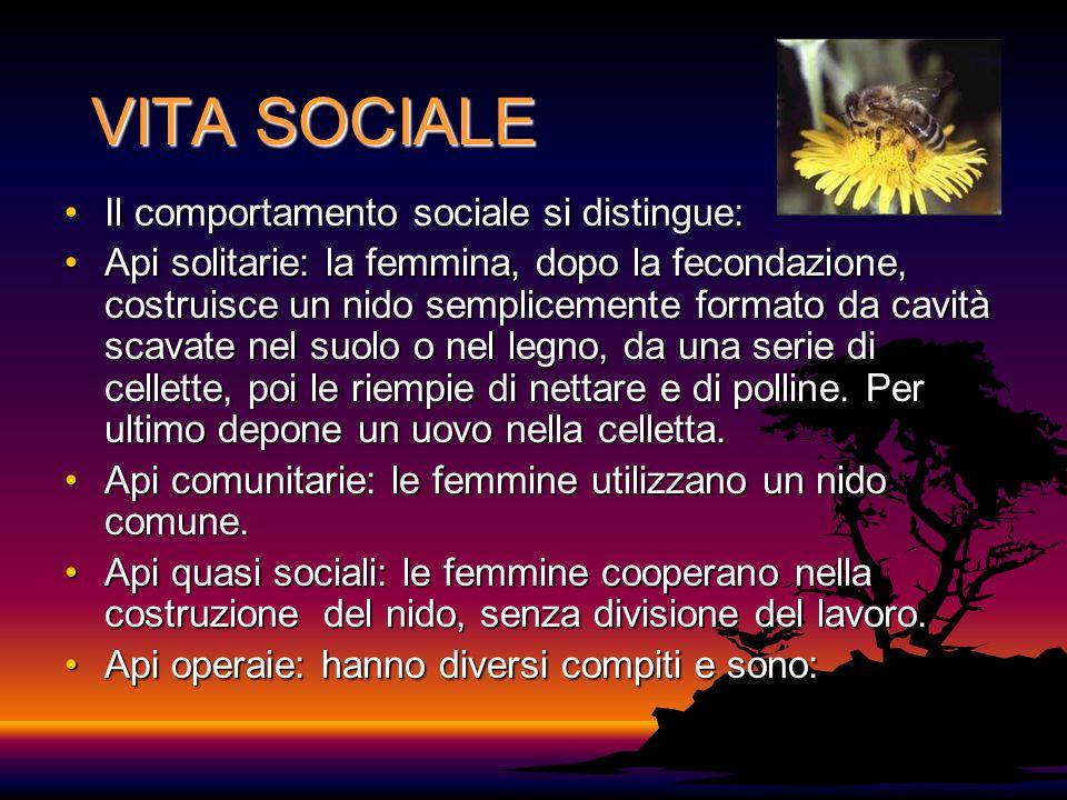 VITA SOCIALE Il comportamento sociale si distingue: