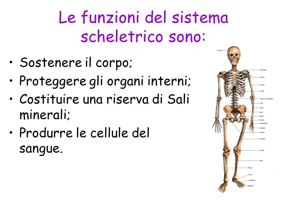 Le funzioni del sistema scheletrico sono: