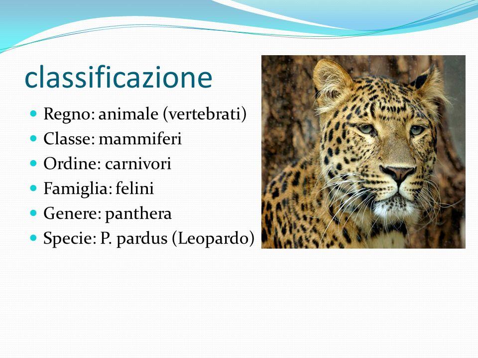 classificazione Regno: animale (vertebrati) Classe: mammiferi
