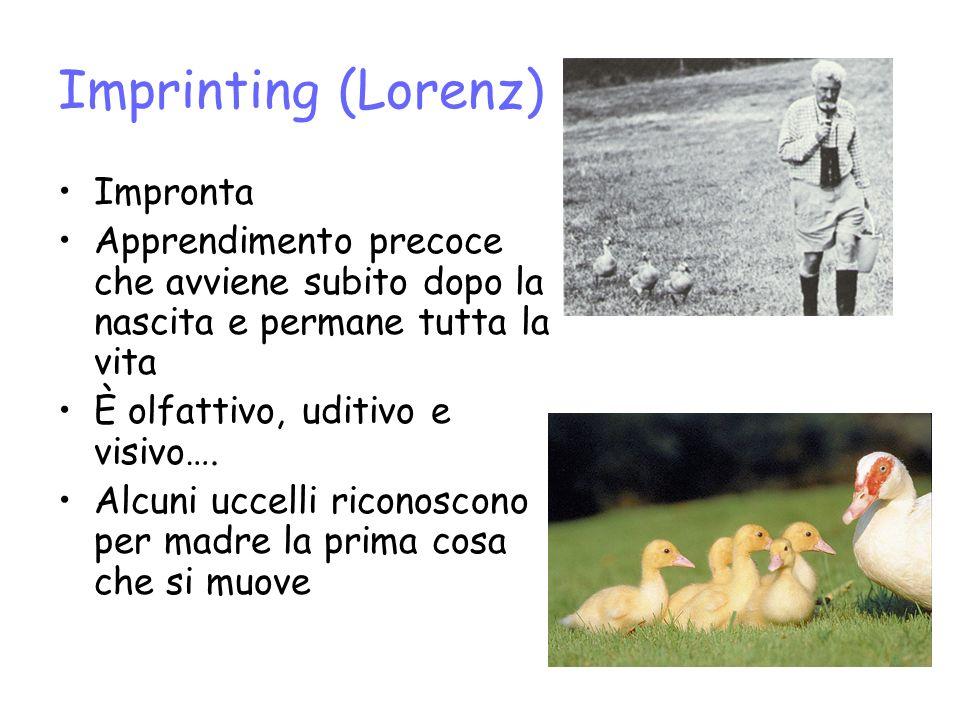 Imprinting (Lorenz) Impronta