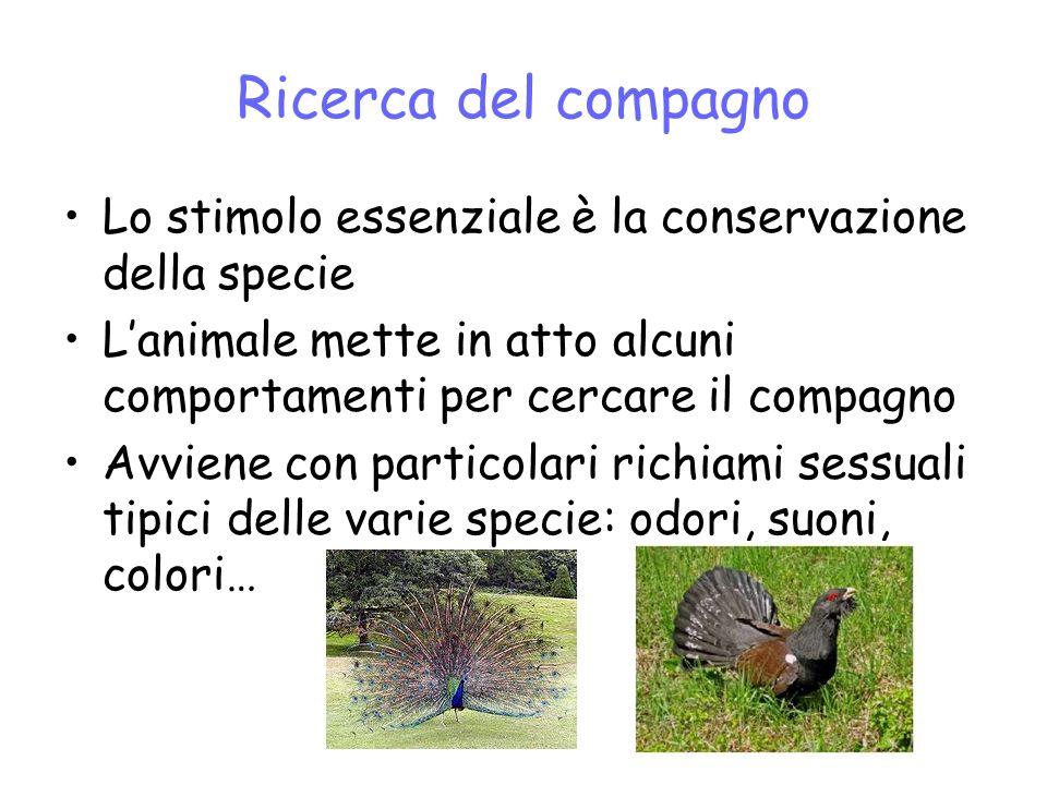 Ricerca del compagno Lo stimolo essenziale è la conservazione della specie. L'animale mette in atto alcuni comportamenti per cercare il compagno.