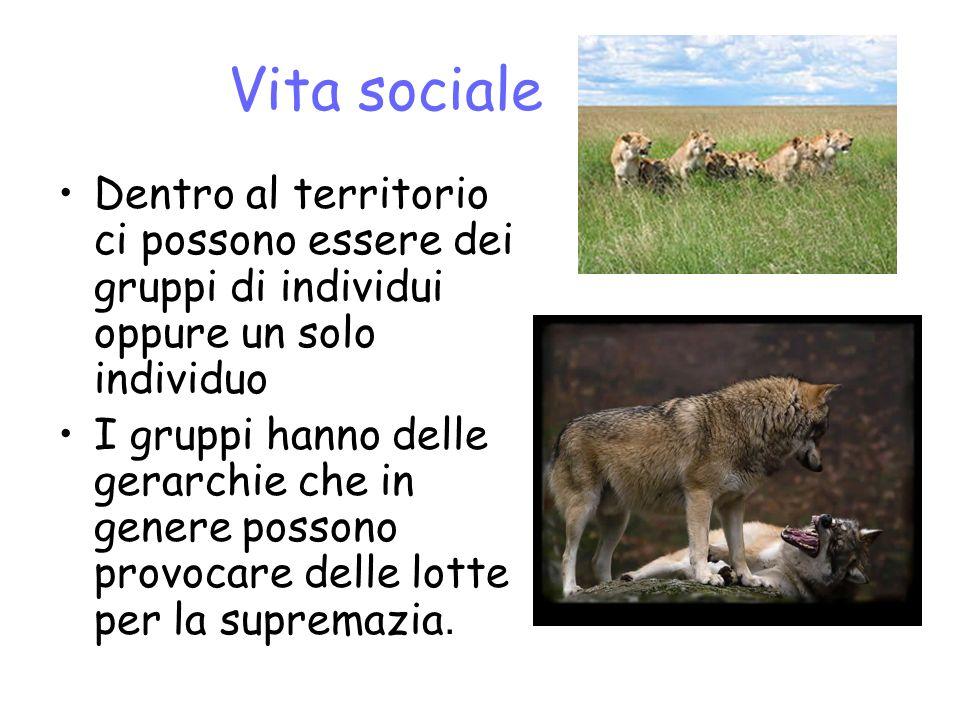 Vita sociale Dentro al territorio ci possono essere dei gruppi di individui oppure un solo individuo.