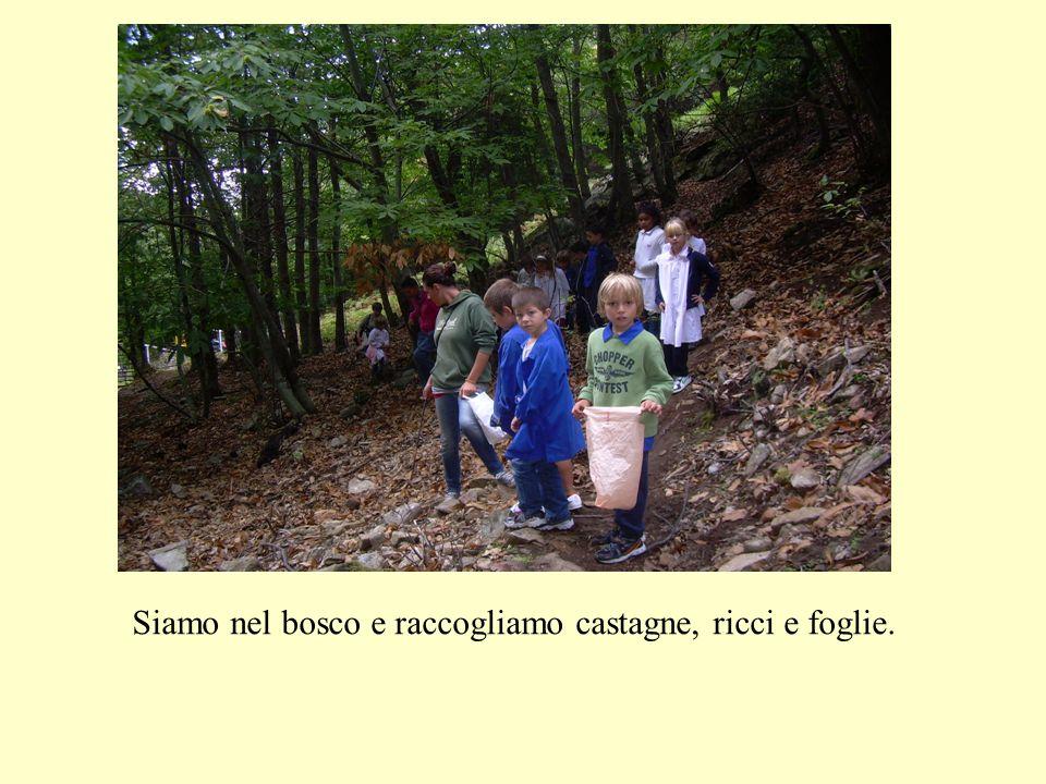 Siamo nel bosco e raccogliamo castagne, ricci e foglie.