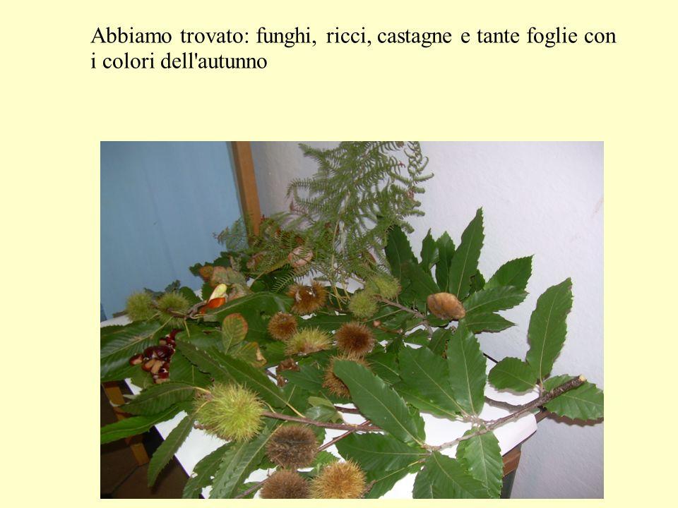 Abbiamo trovato: funghi, ricci, castagne e tante foglie con i colori dell autunno