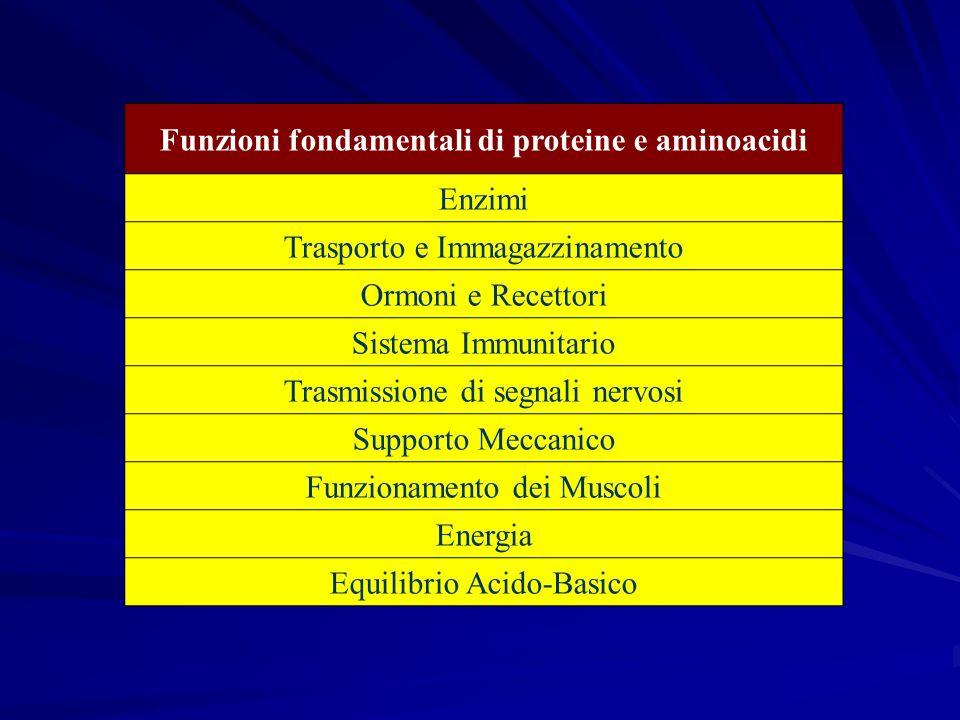 Funzioni fondamentali di proteine e aminoacidi