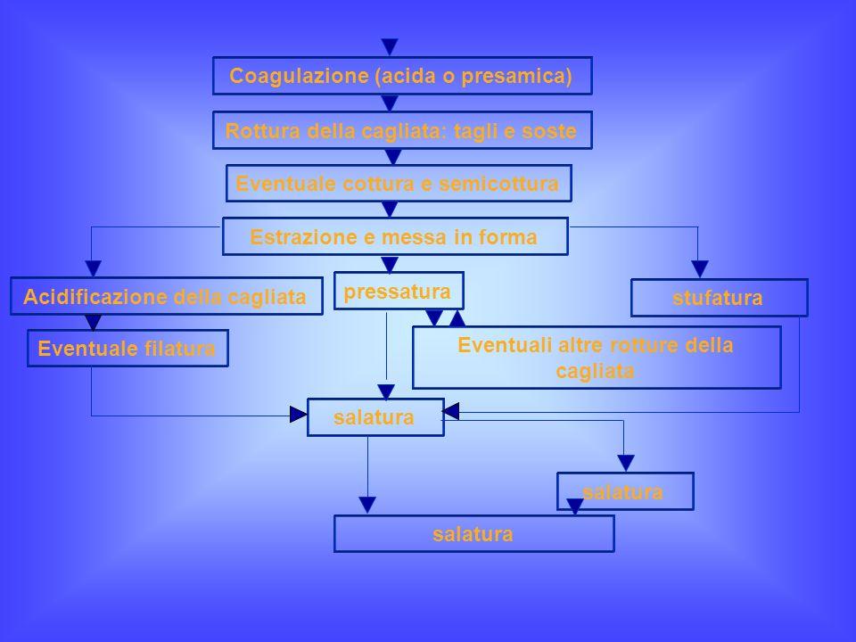 Coagulazione (acida o presamica)