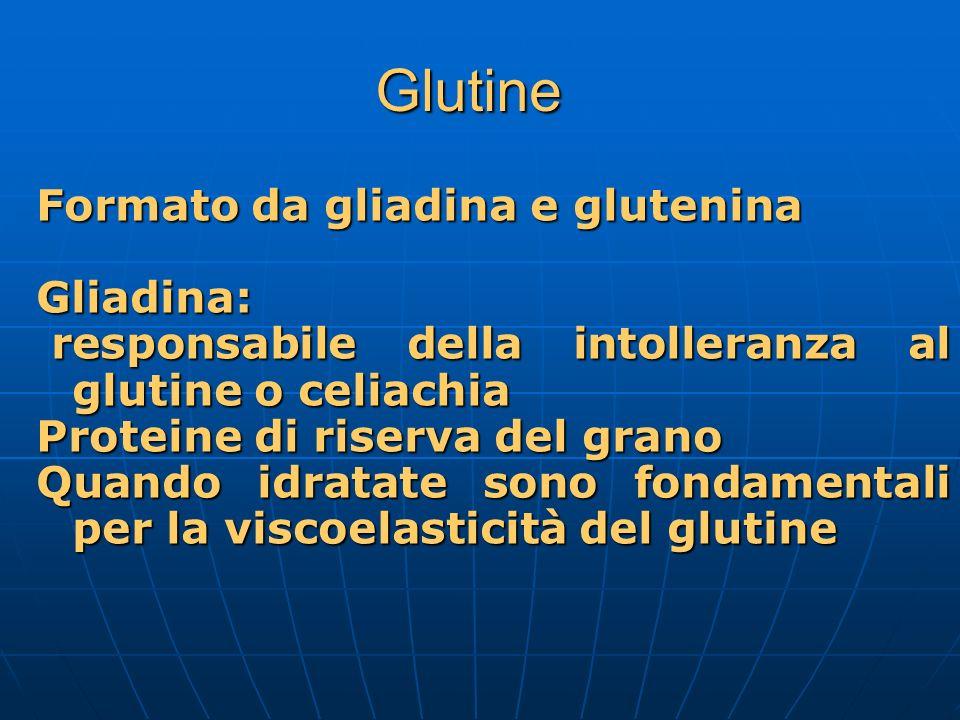 Glutine Formato da gliadina e glutenina Gliadina:
