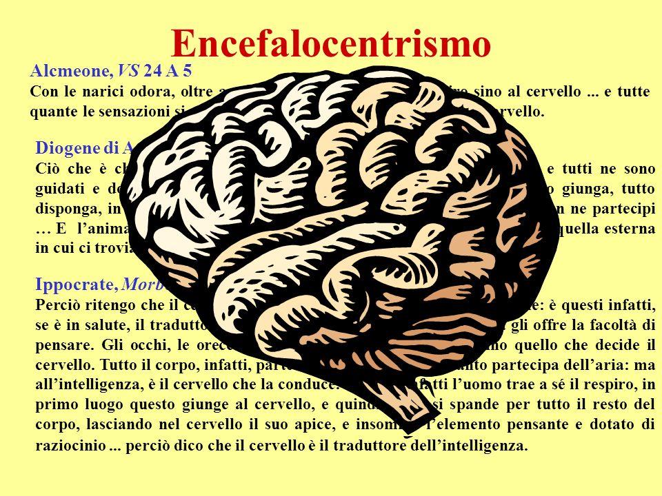 Encefalocentrismo Alcmeone, VS 24 A 5 Diogene di Apollonia, VS 64 B 5