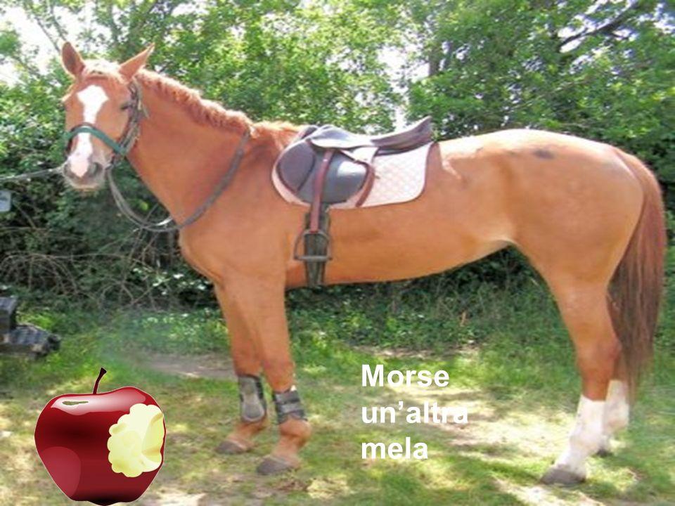 Morse un'altra mela