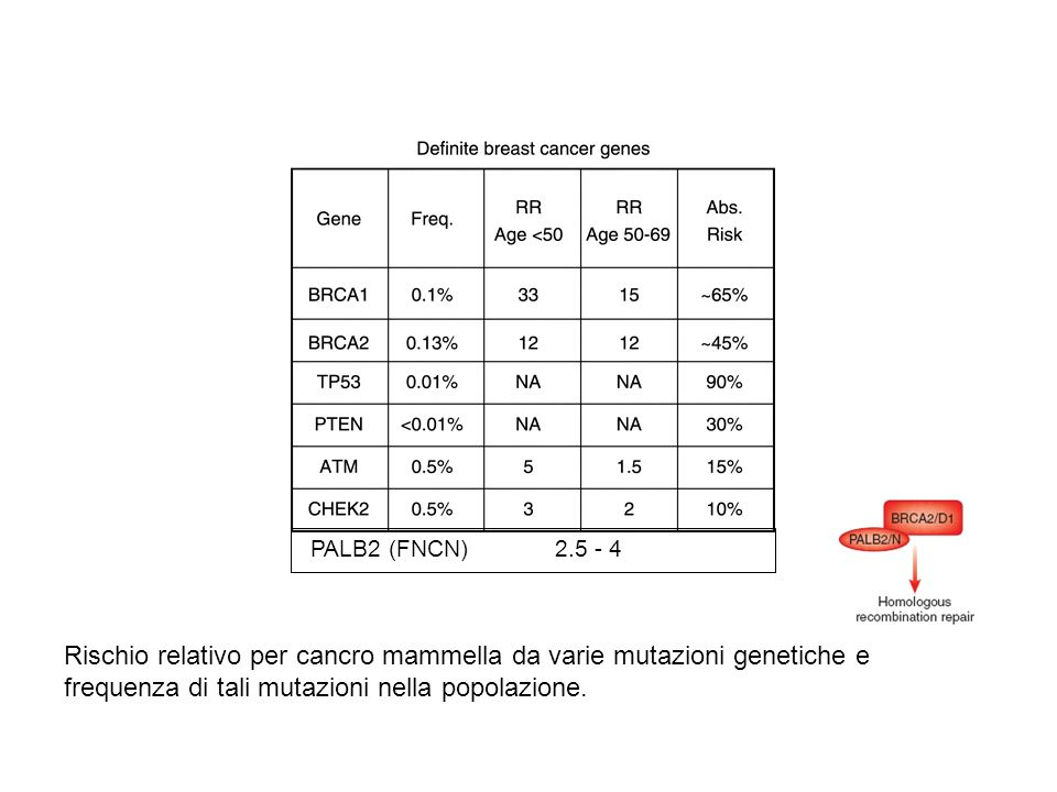 PALB2 (FNCN) 2.5 - 4 Rischio relativo per cancro mammella da varie mutazioni genetiche e frequenza di tali mutazioni nella popolazione.