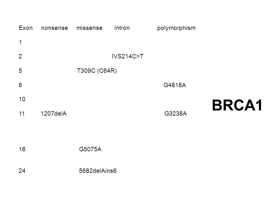 BRCA1 Exon nonsense missense intron polymorphism 1 2 IVS214C>T