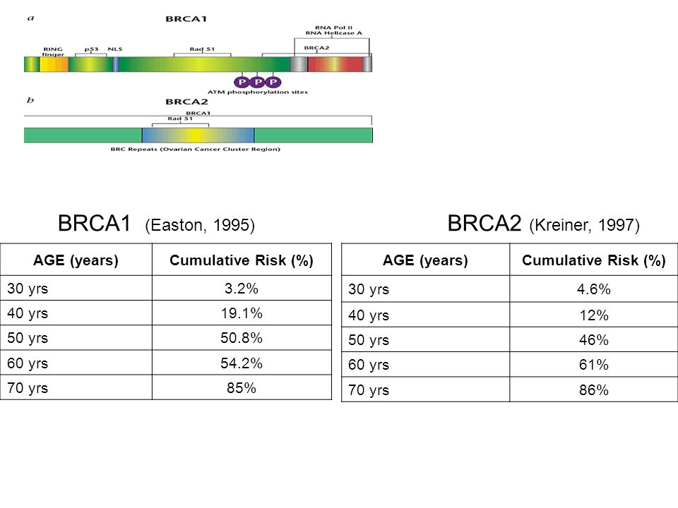 BRCA1 (Easton, 1995) BRCA2 (Kreiner, 1997) AGE (years)