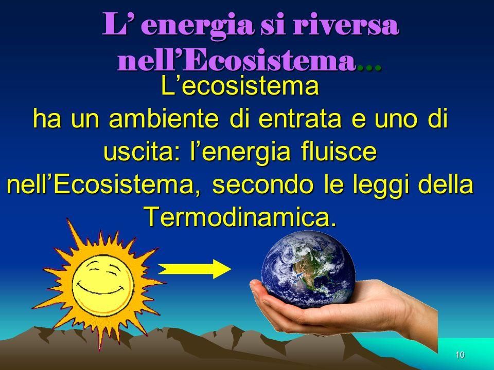 L' energia si riversa nell'Ecosistema…