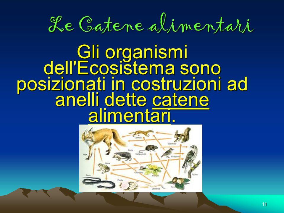 Le Catene alimentari Gli organismi dell Ecosistema sono posizionati in costruzioni ad anelli dette catene alimentari.