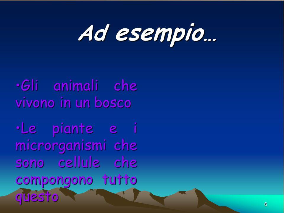 Ad esempio… Gli animali che vivono in un bosco