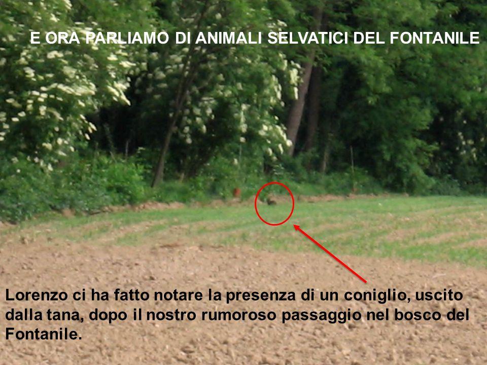 E ORA PARLIAMO DI ANIMALI SELVATICI DEL FONTANILE