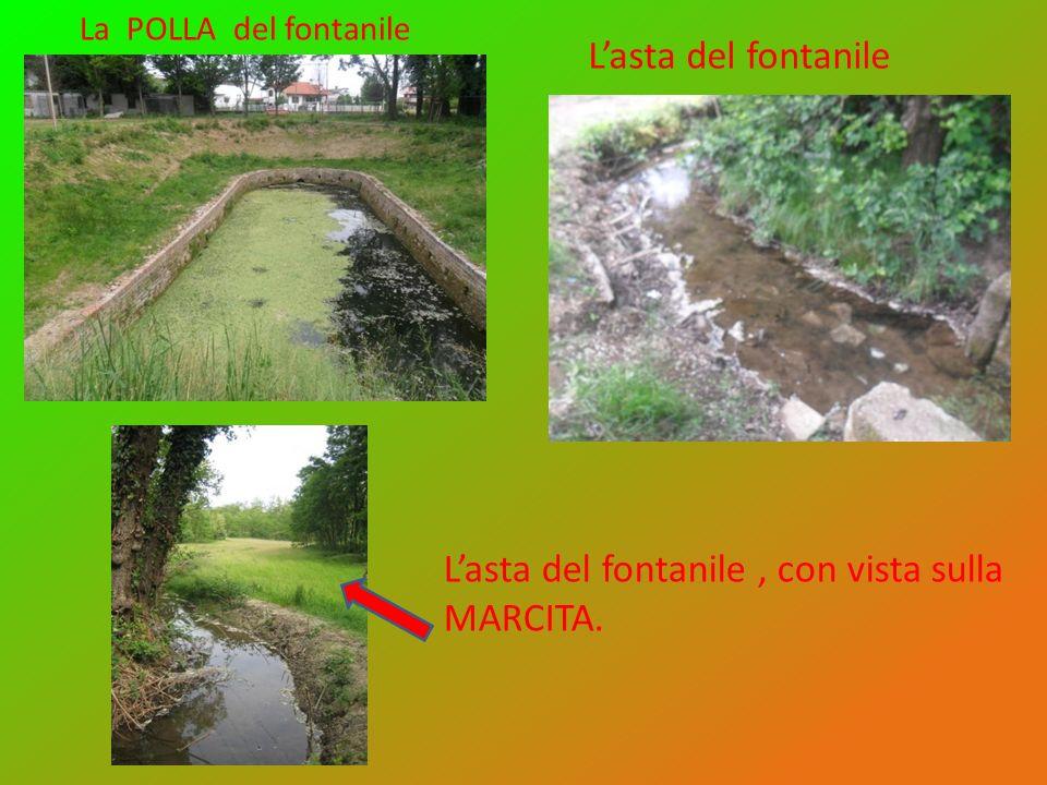 L'asta del fontanile , con vista sulla MARCITA.
